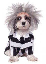 Beetlejuice Pet Dog Costume